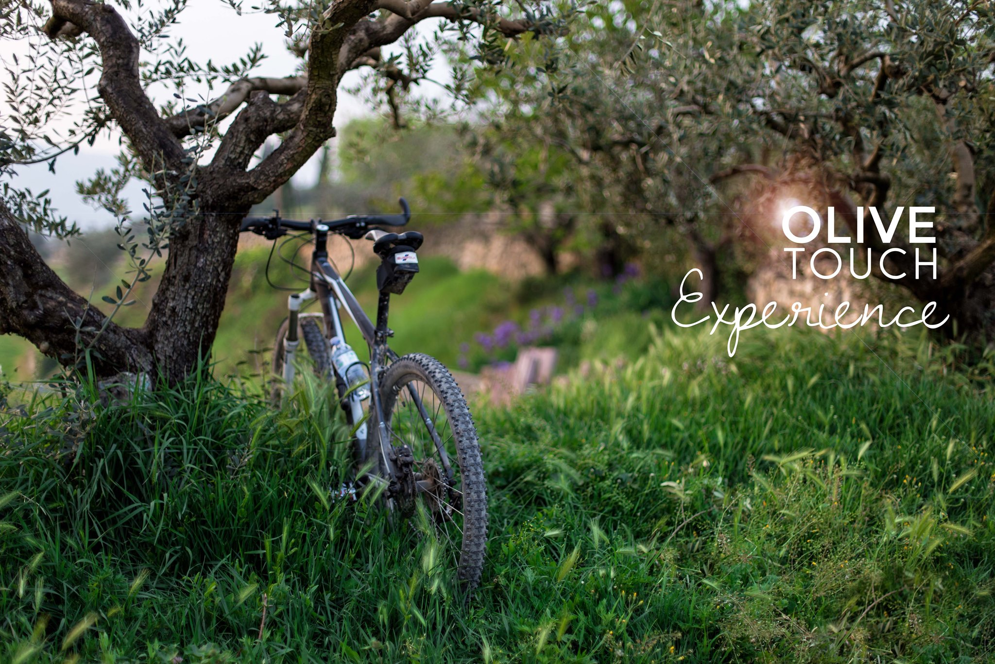 olivetouch.jpg