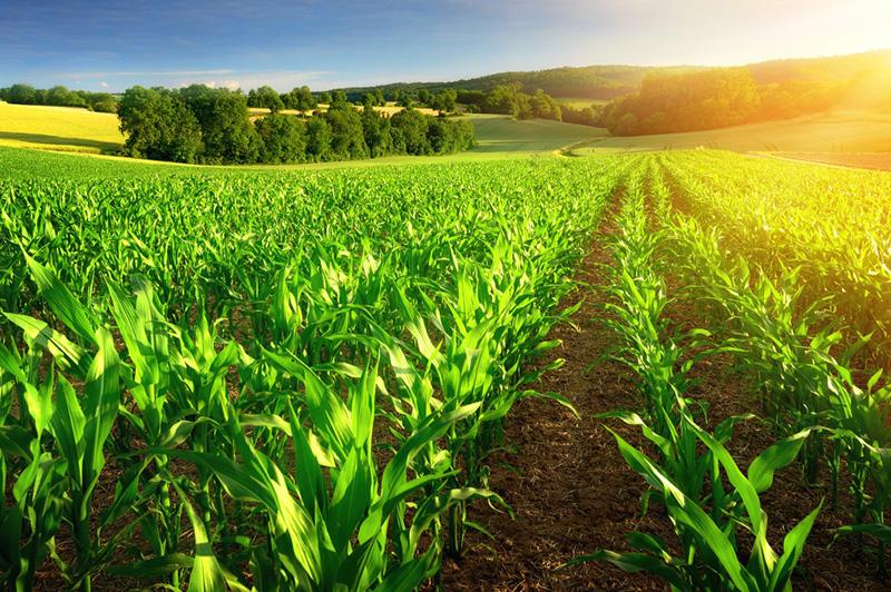 14-Poljoprivreda-okoliç-i-klimatske-promjene-uvod.jpg